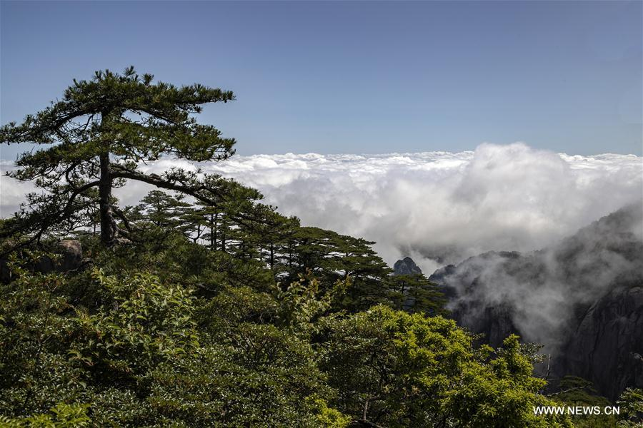 #CHINA-ANHUI-HUANGSHAN-CLOUDS-SCENERY(CN)