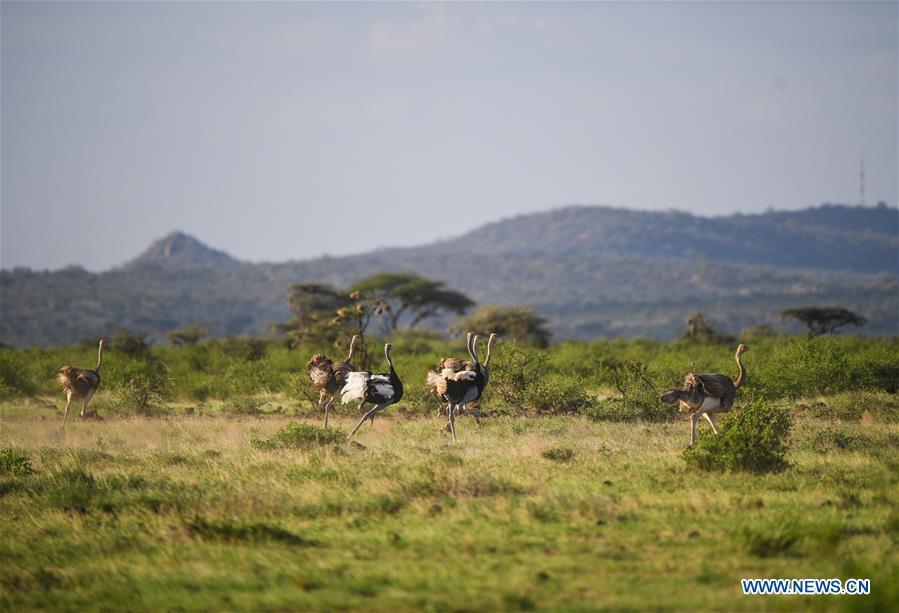 KENYA-SAMBURU-NATIONAL RESERVE