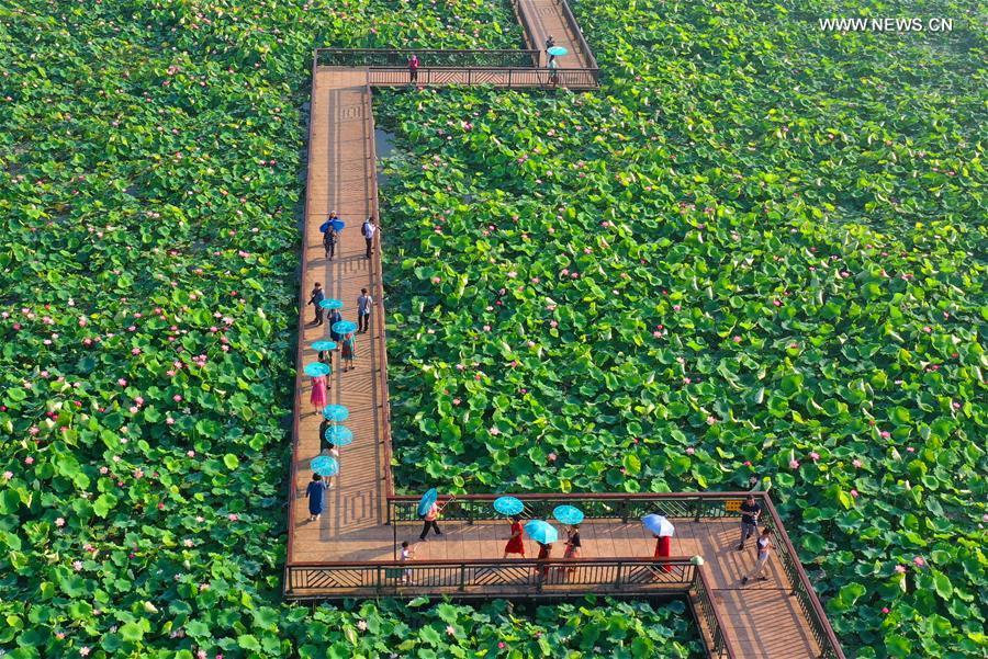 #CHINA-HUNAN-NATURE-LOTUS(CN)