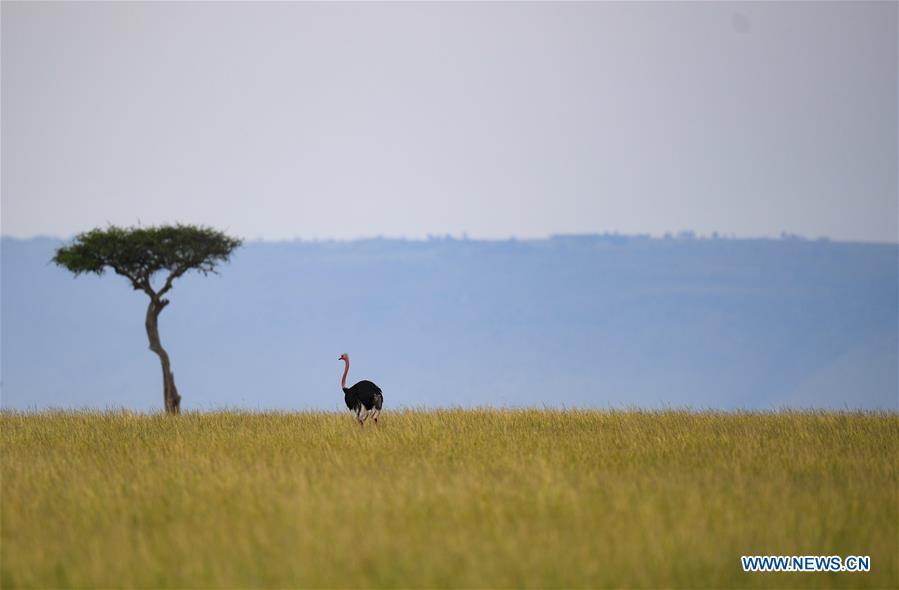 KENYA-MAASAI MARA-NATIONAL RESERVE