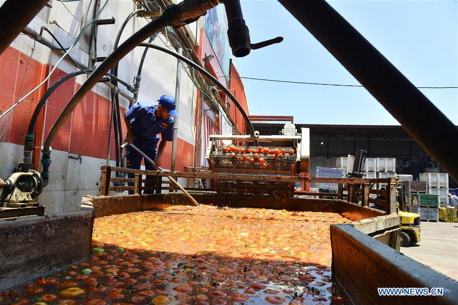 Palestinian employees work at tomato paste factory in Gaza
