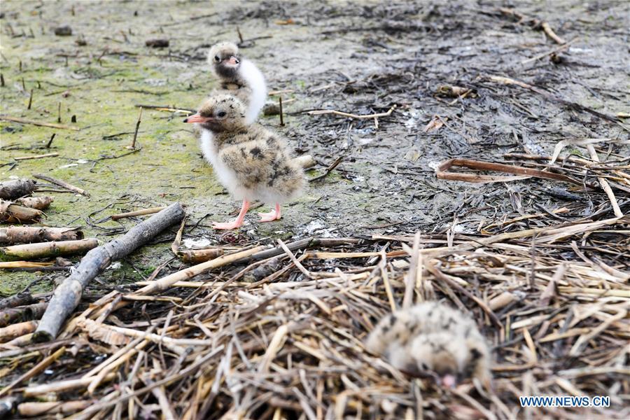 CHINA-JIANGSU-WETLAND-BIRDS (CN)