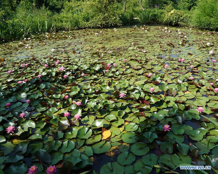 美国 - 华盛顿特区 - 夏季 - 花园 - 风景