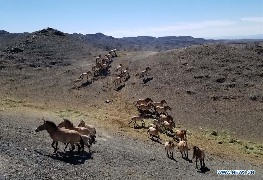 中国 - 新疆 -  PRZEWALSKI的马(CN)