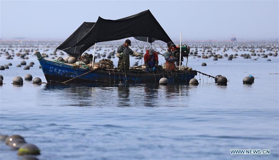 中国 - 大连 - 长海 - 鱼类收获(CN)