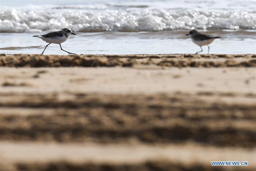 CHINA-HAINAN-HAOUOU-WETLAND PARK-BIRDS(CN)