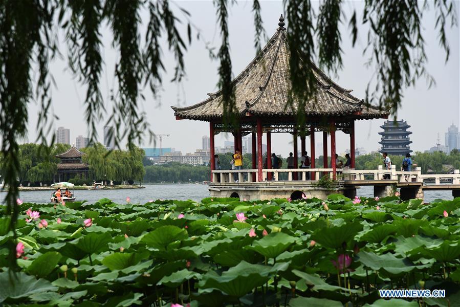 CHINA-SHANDONG-JINAN-DAMING LAKE-LOTUS (CN)
