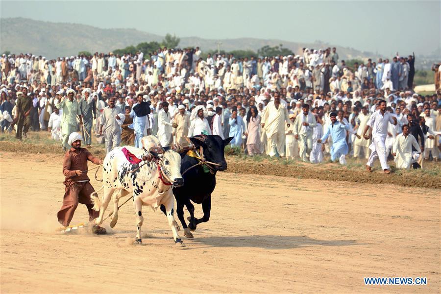 (SP)PAKISTAN-HASAR-BULL RACE