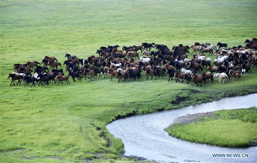 CHINA-INNER MONGOLIA-HORSES (CN)