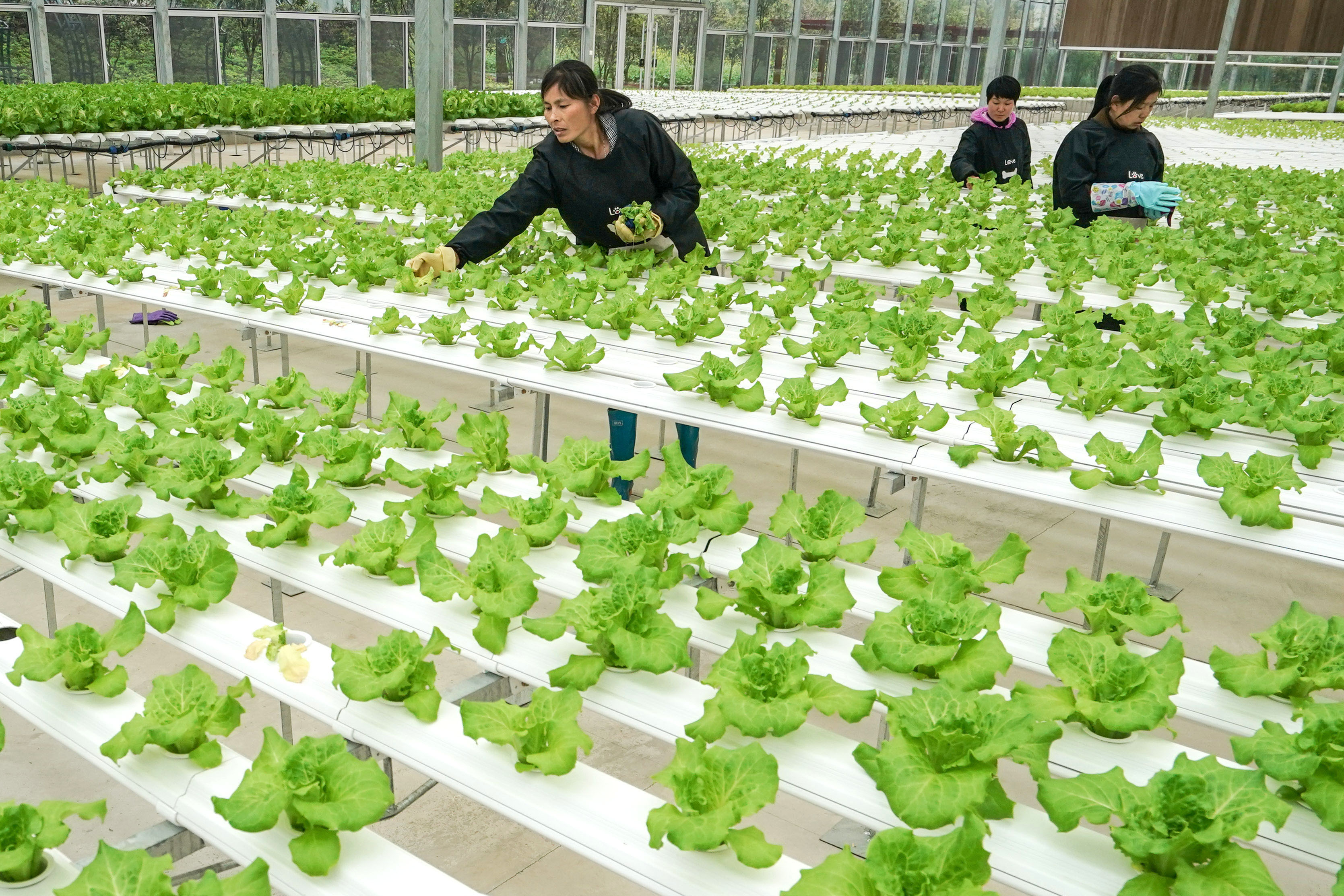 Interview: Big opportunity to develop agriculture technology
