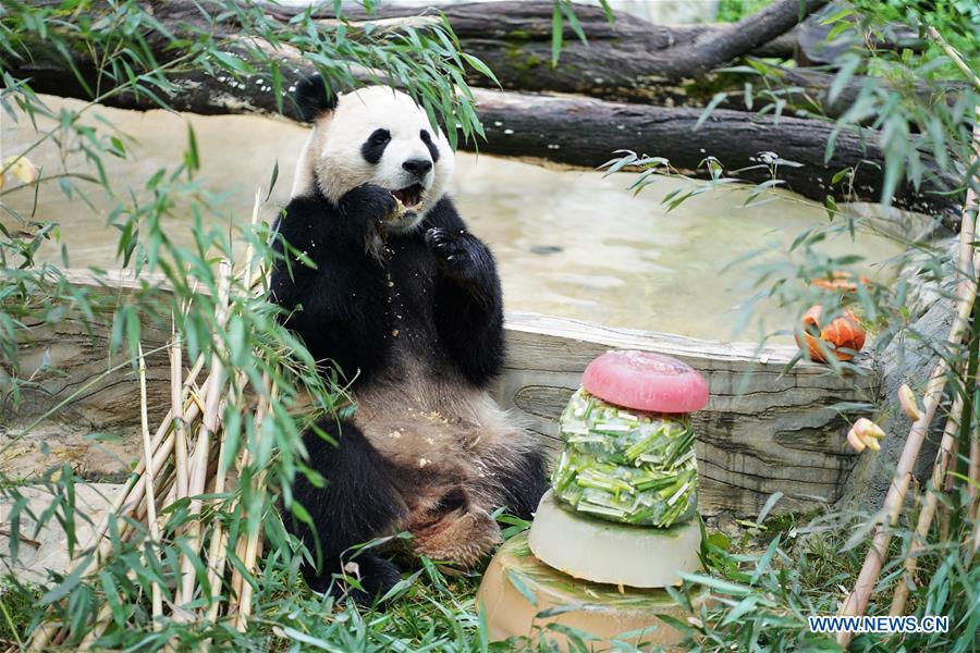 CHINA-YUNNAN-KUNMING-PANDA-BIRTHDAY (CN)