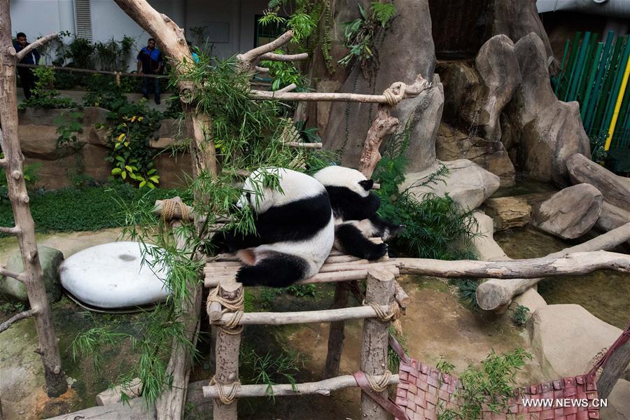 MALAYSIA-KUALA LUMPUR-GIANT PANDA CUB-NAMING-YI YI