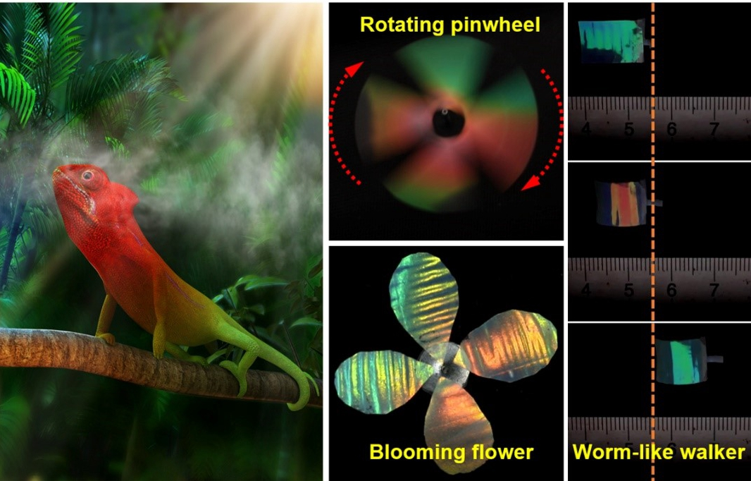 Chinese scientists develop chameleon-inspired soft robot - Xinhua   English.news.cn