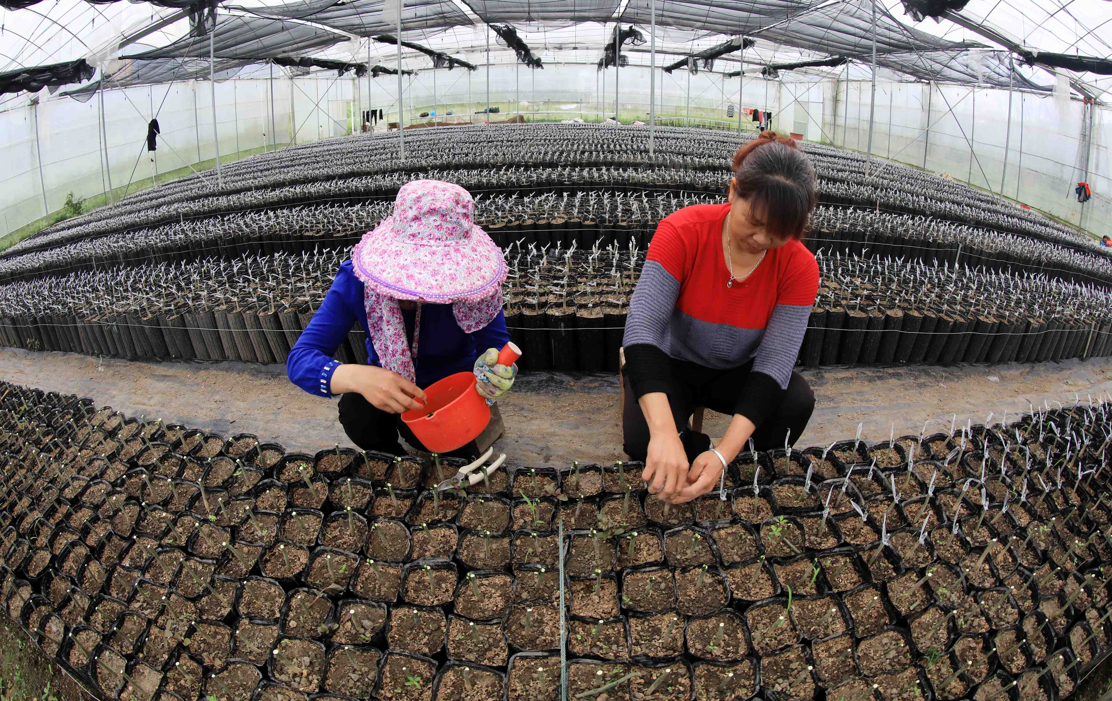 Village in S China shakes off poverty and gains better living conditions - Xinhua   English.news.cn