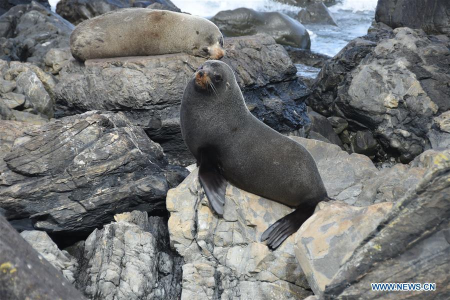 新西兰 - 惠灵顿动物