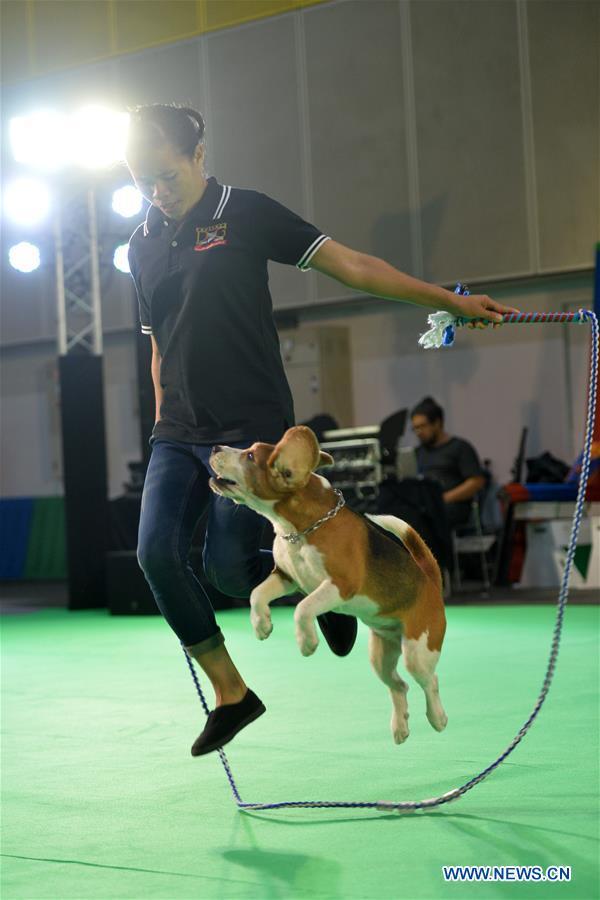 泰国 - 曼谷 - 宠物博览会