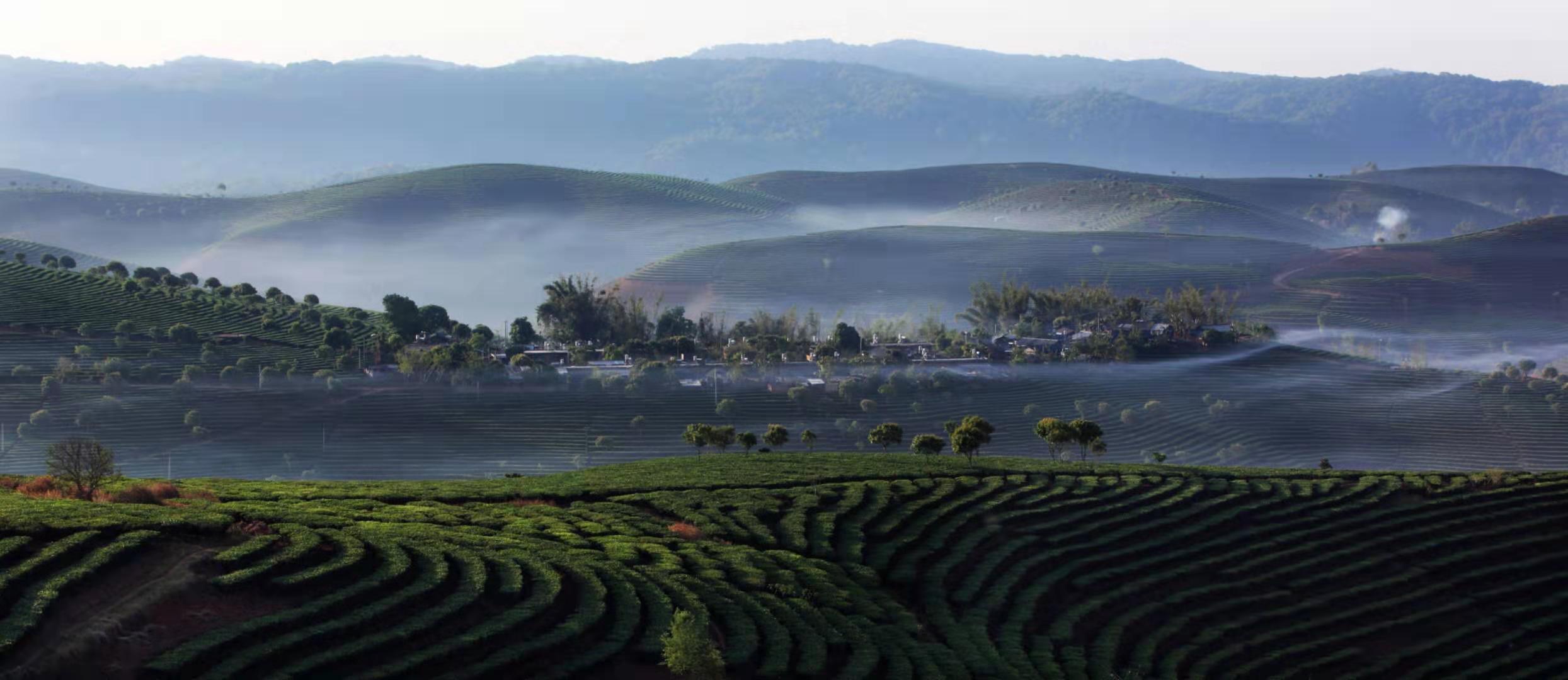 Dadugang recognized as world's largest tea plantation  - Xinhua | English.news.cn