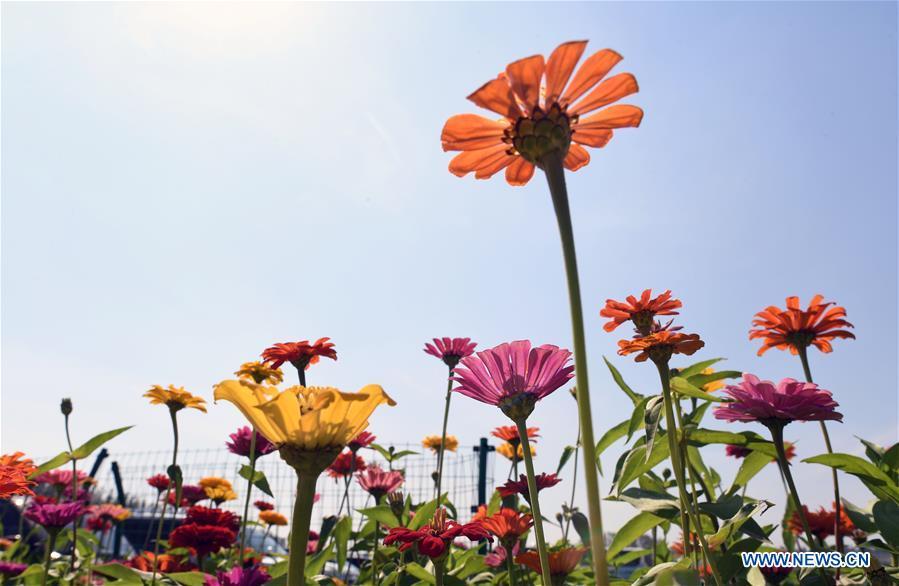 中国 - 吉林 - 长春花卉(中国)