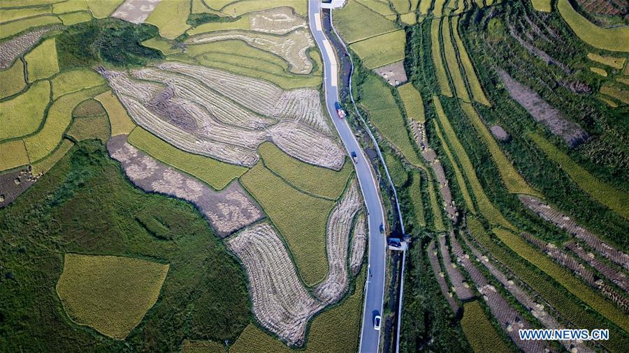 CHINA-HUNAN-HUAYUAN COUNTY-RICE FIELD-AUTUMN SCENERY (CN)