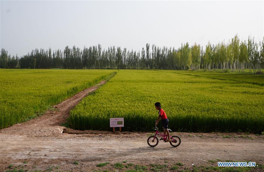 CHINA-XINJIANG-PAHTAKLA-ENVIRONMENT IMPROVEMENT (CN)