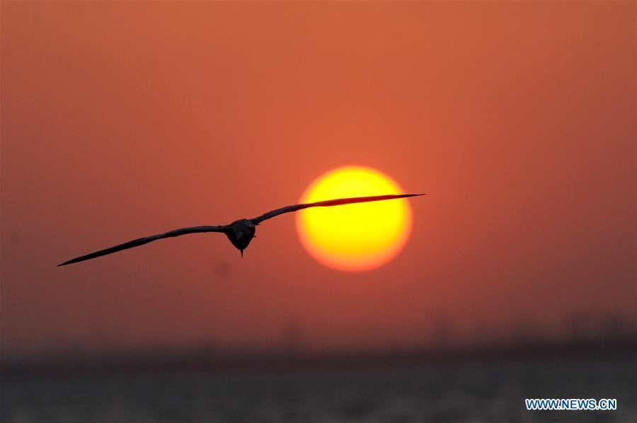 科威特 - 科威特市 - 日落鸟类