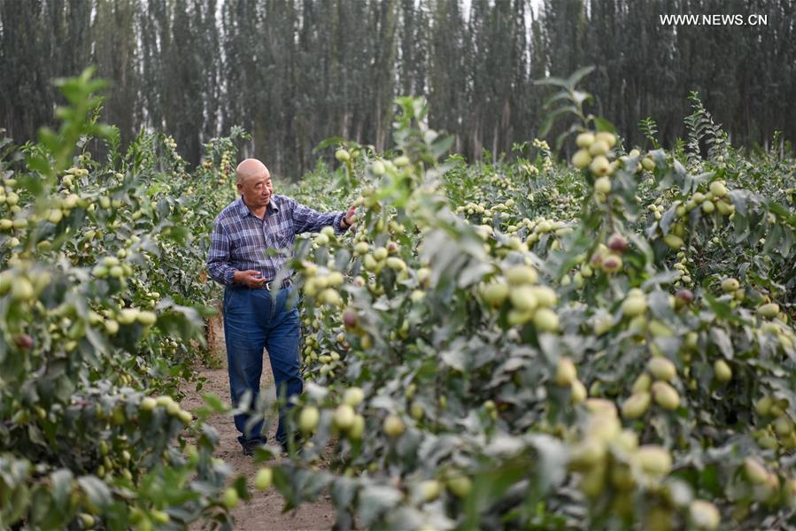 CHINA-XINJIANG-POVERTY ALLEVIATION (CN)