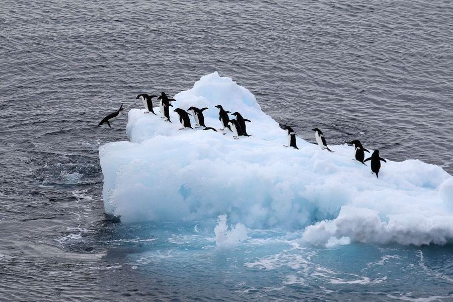 Have a trip to China's Antarctic station  - Xinhua   English.news.cn