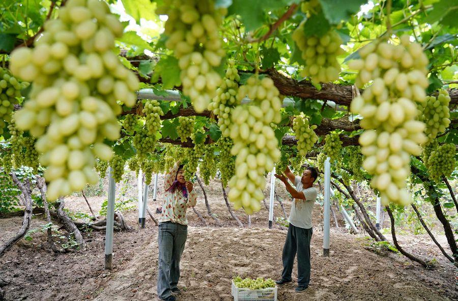 Farmers' festival celebrated as China stresses food security - Xinhua | English.news.cn