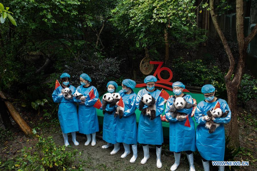 CHINA-CHENGDU-GIANT PANDA-CUBS (CN)