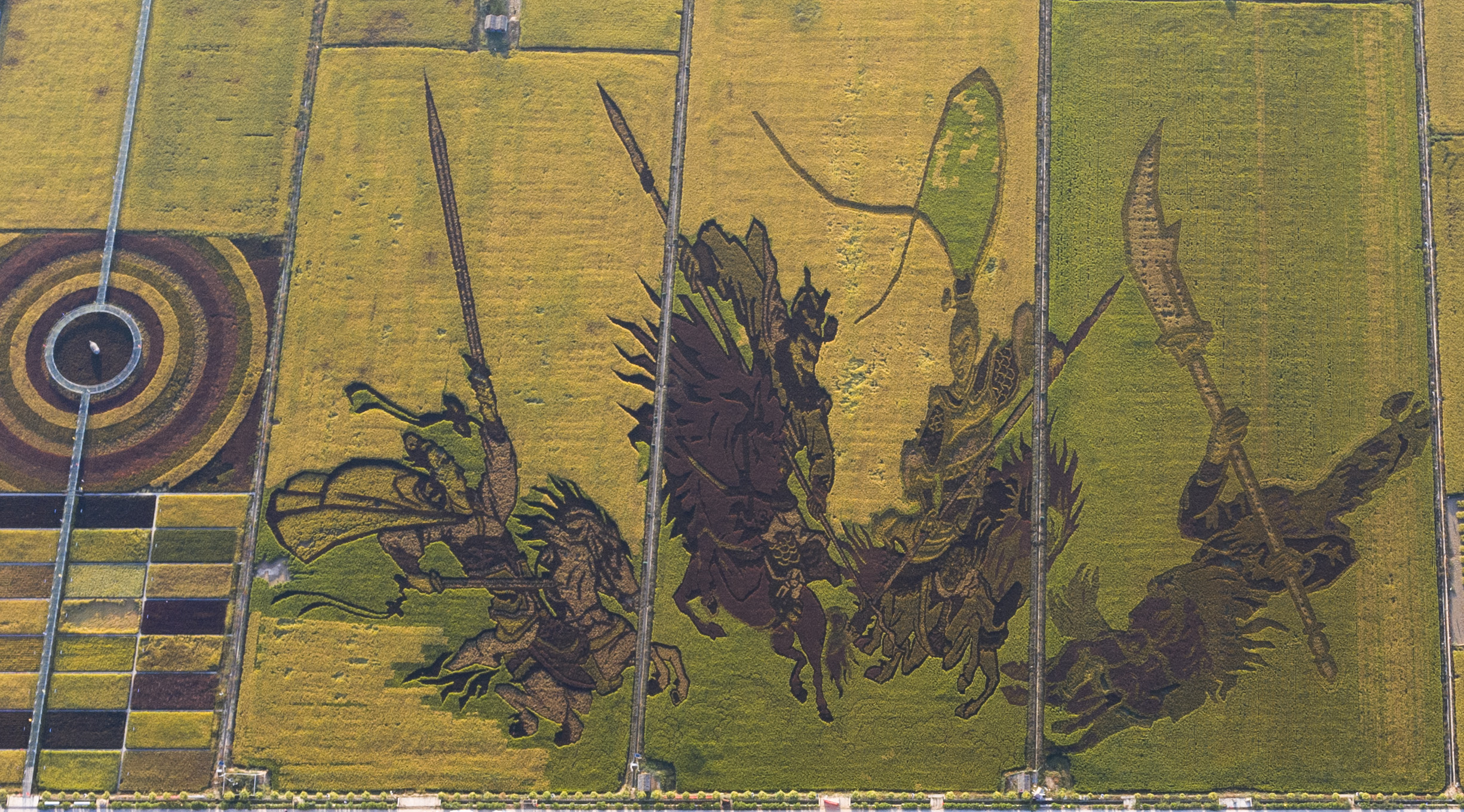 Rice Paddy Art in Ningxia - Xinhua | English.news.cn