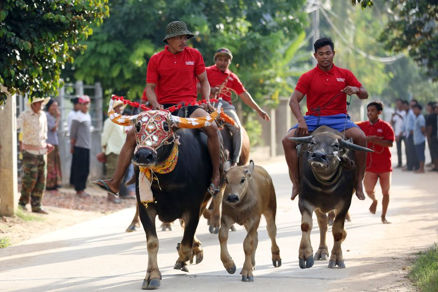 Traditions cherished: buffalo race in Cambodia attracts crowds of spectators - Xinhua   English.news.cn