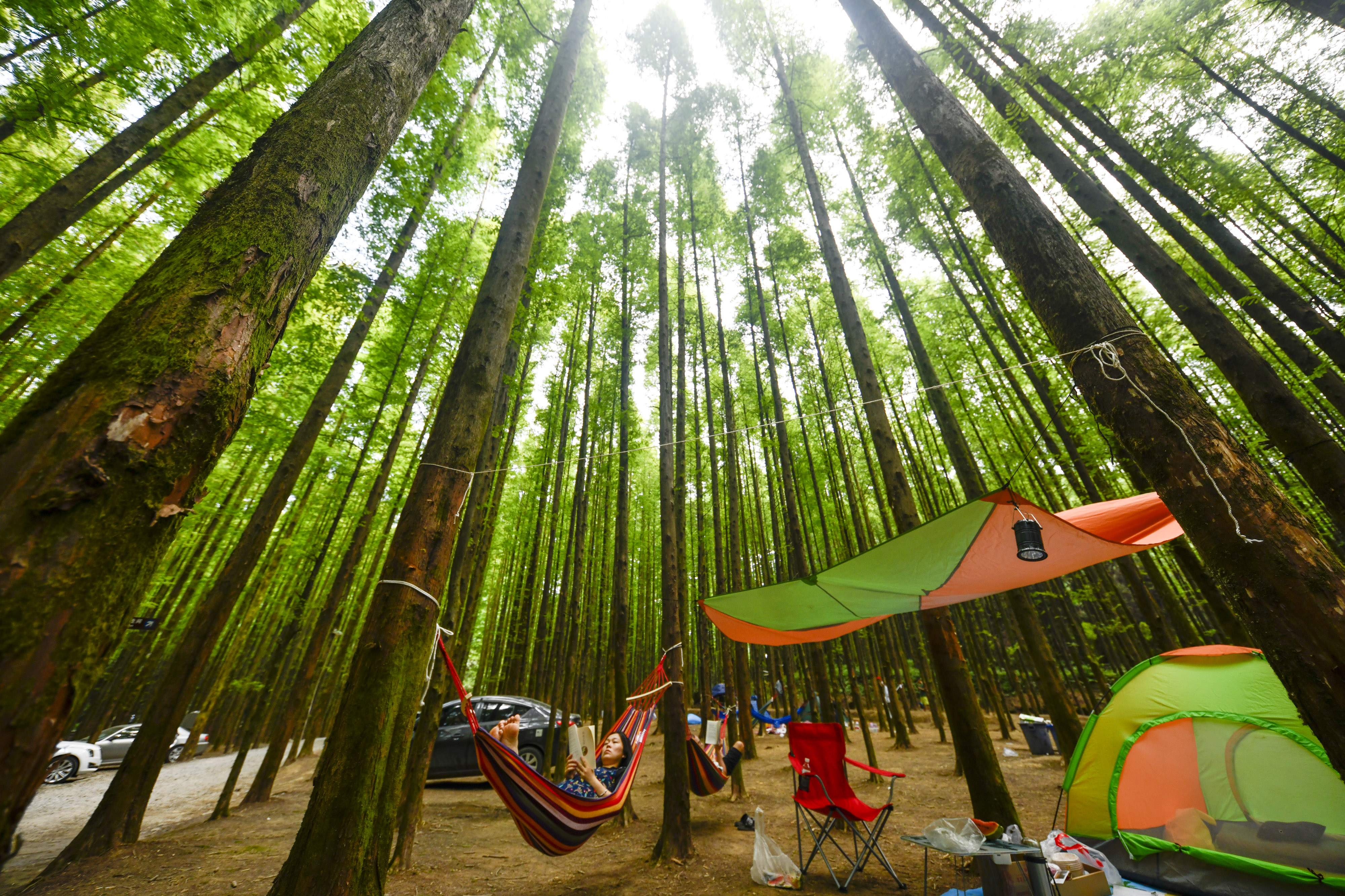 Charm of Chinese forests keeps attracting visitors  - Xinhua | English.news.cn