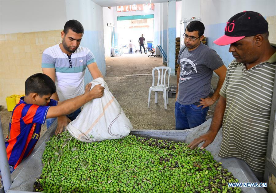 中东加沙橄榄油厂