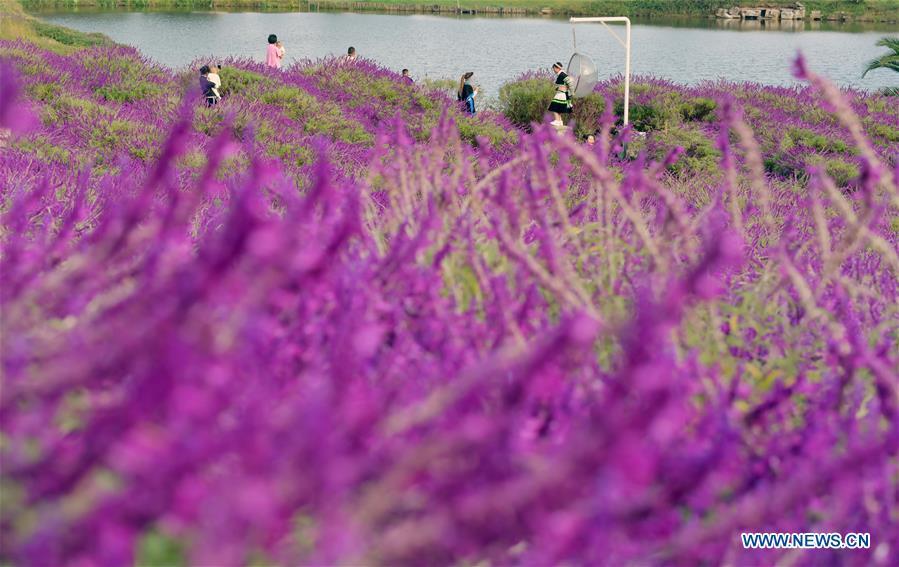 CHINA-YUNNAN-FLOWERS-TOURISM(CN)