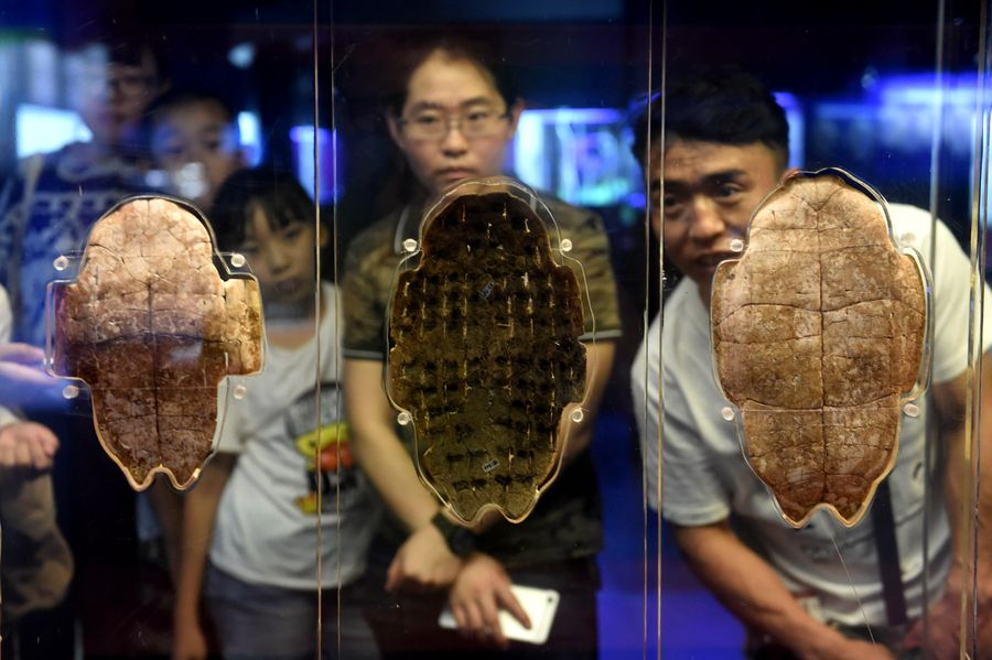 China to start commemorating 120th anniversary of oracle bone inscription discovery - Xinhua | English.news.cn