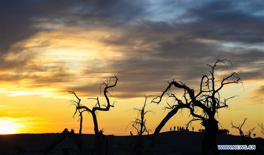 CHINA-INNER MONGOLIA-DESERT POPLAR TREES-SCENERY (CN)