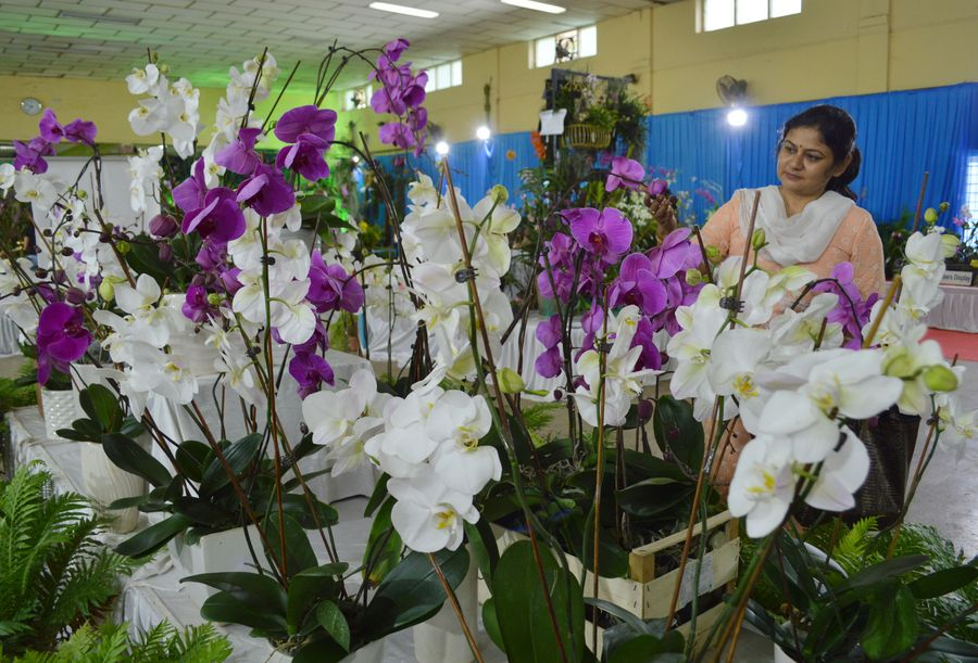 A feast for the eyes! Orchid Show held in India's Bangalore - Xinhua   English.news.cn