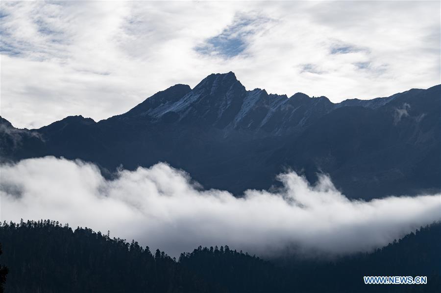 CHINA-TIBET-LULANG-SCENERY (CN)