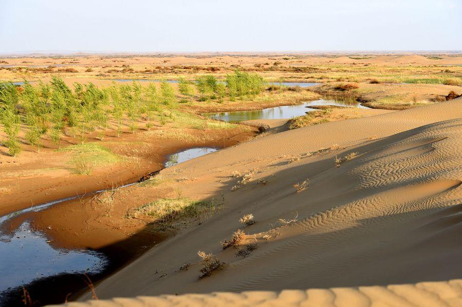 Deserts along Yellow River in Inner Mongolia see sharp decrease - Xinhua | English.news.cn