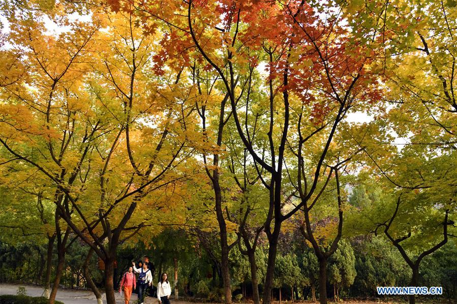 CHINA-SHANDONG-JINAN-AUTUMN SCENERY (CN)