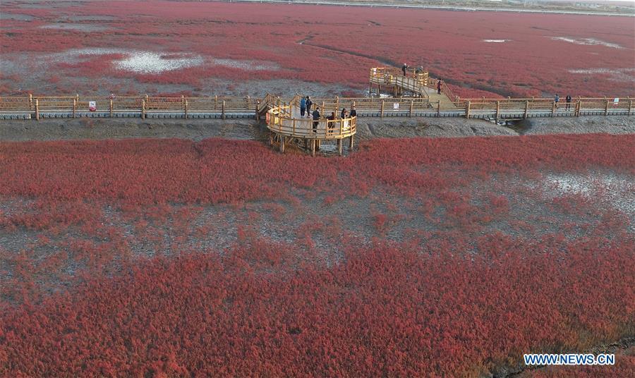 CHINA-LIAONING-PANJIN-RED BEACH-SCENERY (CN)