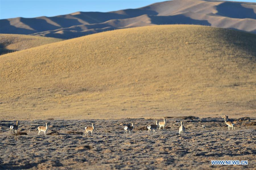 CHINA-QINGHAI-GOLOG-WILDLIFE (CN)