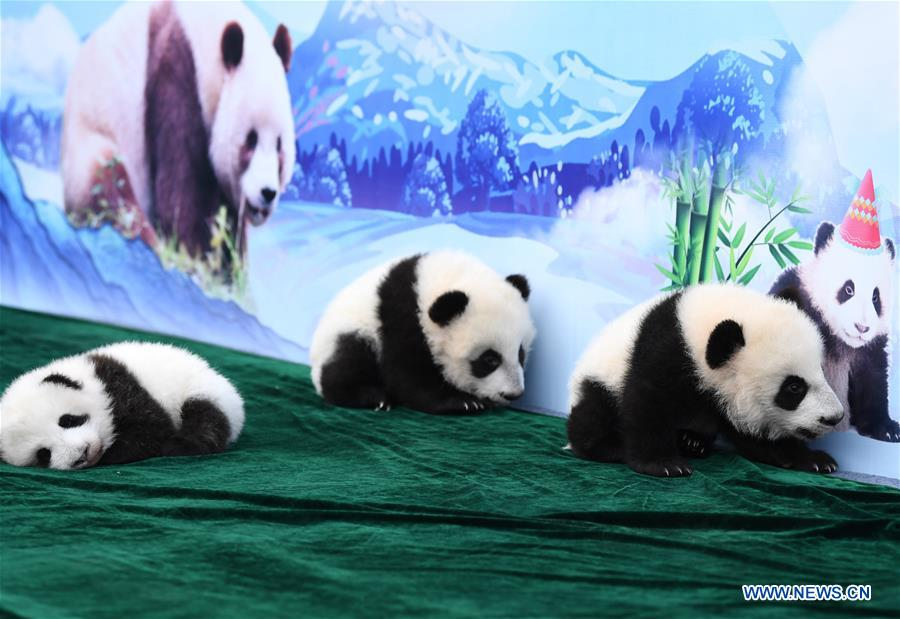 CHINA-SHAANXI-GIANT PANDA-FIRST APPEARANCE (CN)