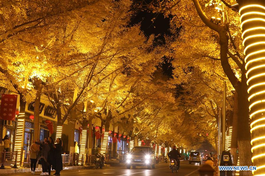 CHINA-GANSU-TIANSHUI-GINGKO TREE (CN)