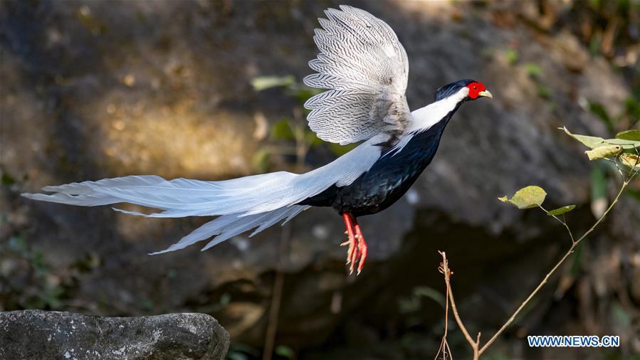 CHINA-FUJIAN-WINTER-BIRDS (CN)