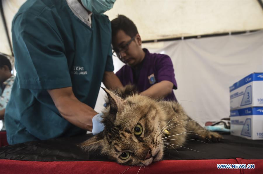 印度尼西亚-雅加达-免费抗狂犬病疫苗