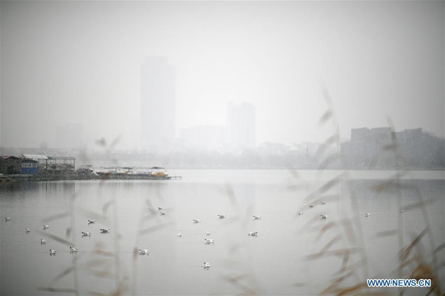 中国-宁夏-银川-雪球(CN)
