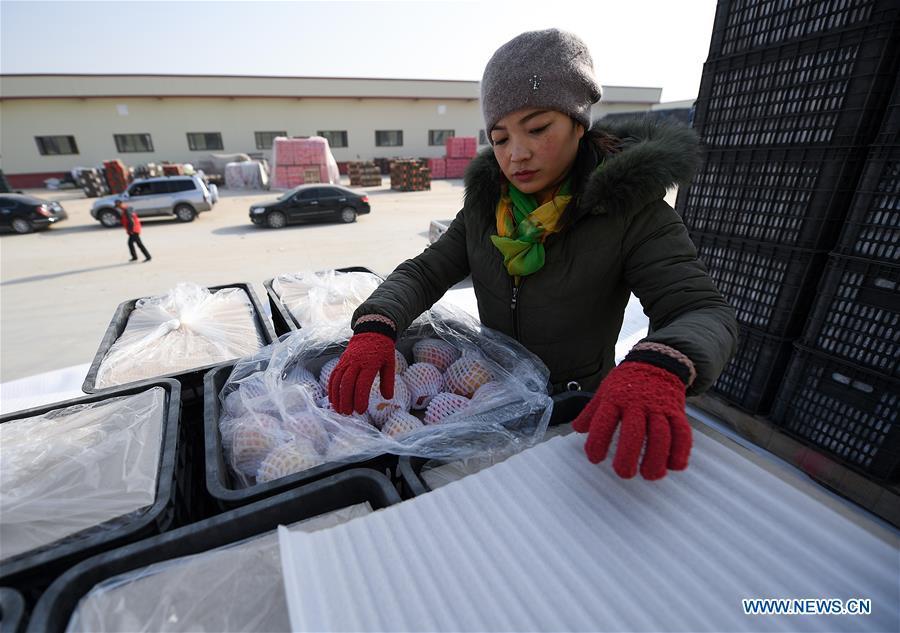 中国新疆阿克苏苹果(CN)