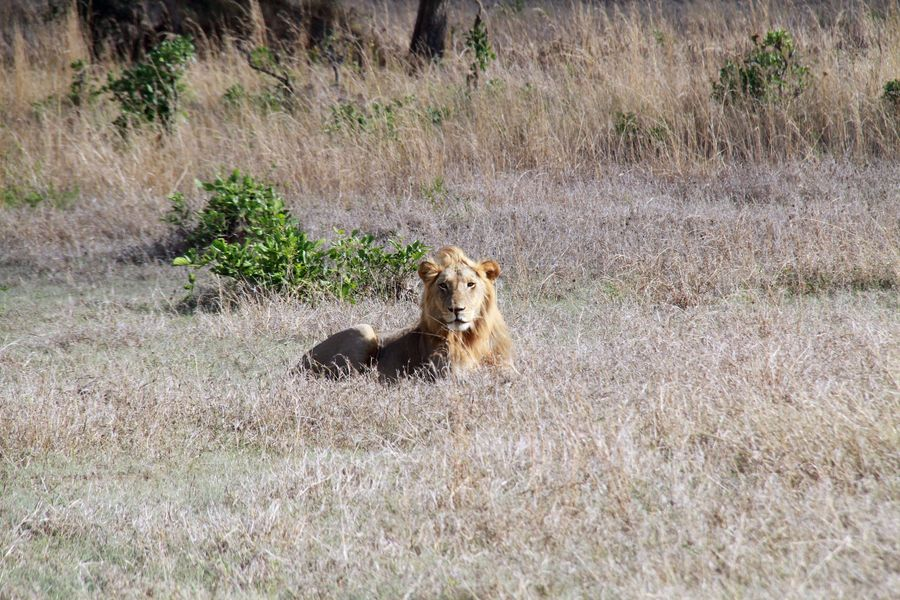 96 killed, 90 wounded by Tanzanian wild animals in one year - Xinhua | English.news.cn