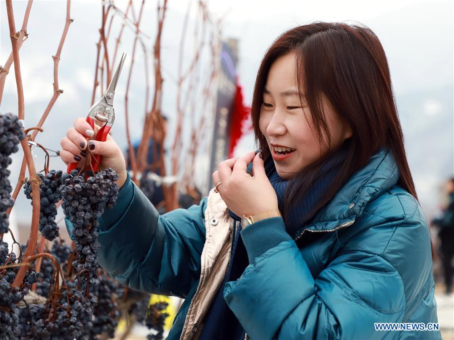 CHINA-JILIN-ICE WINE FESTIVAL (CN)
